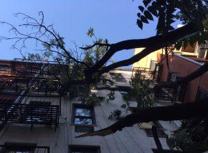 Hazardous Tree Inspection