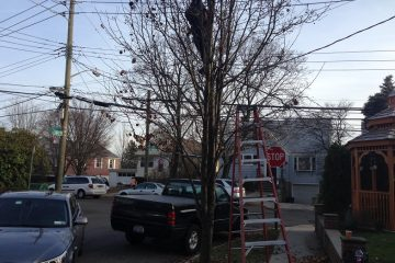 Best Tree Service in Bronx and Harlem
