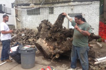Tree Stump Removal & Grinding
