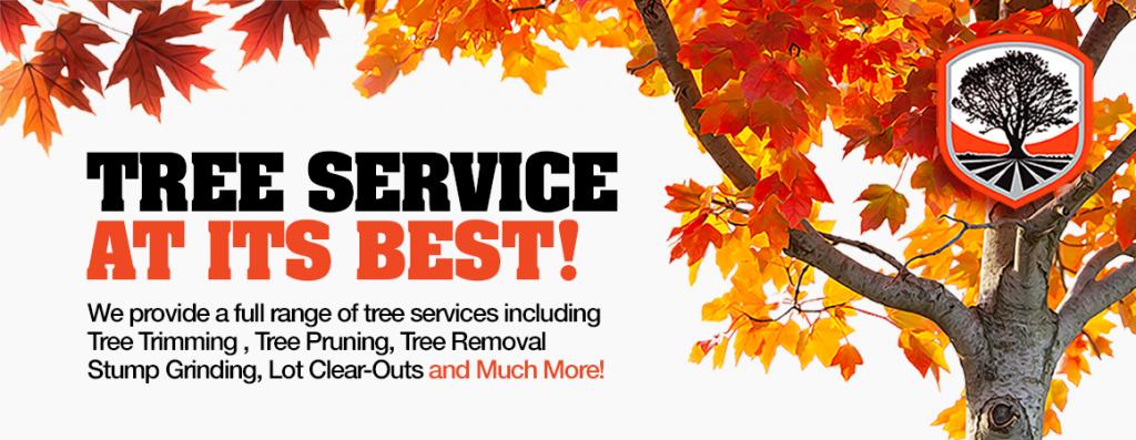 Bronx Tree Service Company