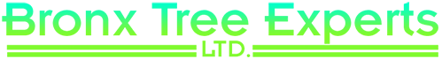 Bronx Tree Pro | Tree Removal