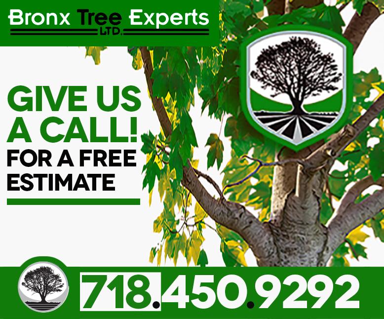 24 Hour Tree Service Bronx NY