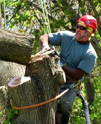 Bronx Tree Cutting Service