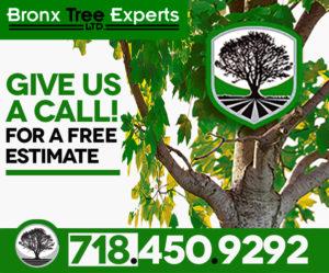 Tree Care Experts Bronx NYC