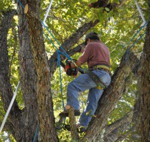 Tree Cutting Bronx