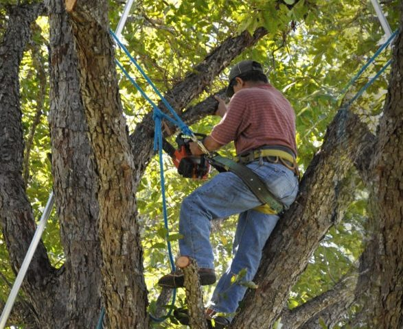 Tree Cutting Bronx, Bronx tree trimming, Bronx tree pruning, tree trimming service Bronx