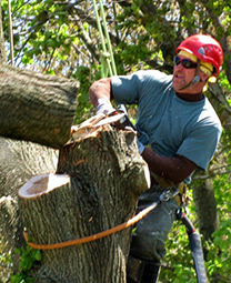 Bronx Tree Cutting Service